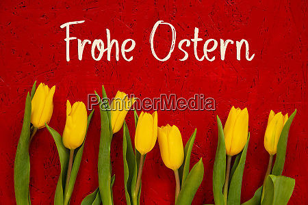 yellow tulip flowers red background frohe