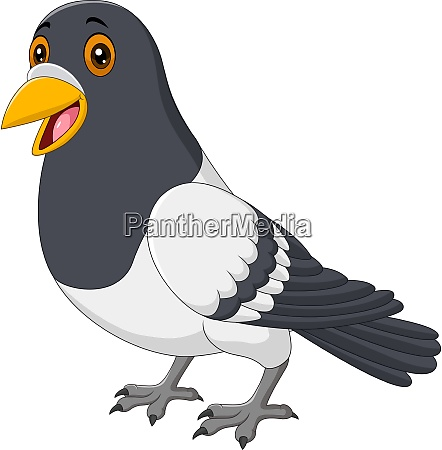 cartoon funny pigeon isolated on white