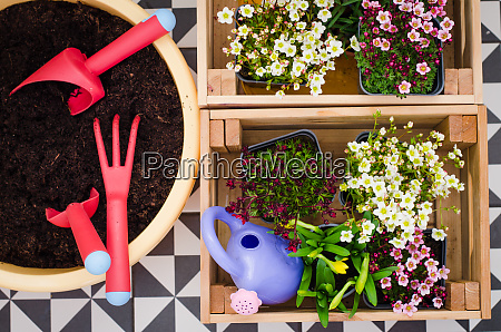 gardening tools and seedling of spring