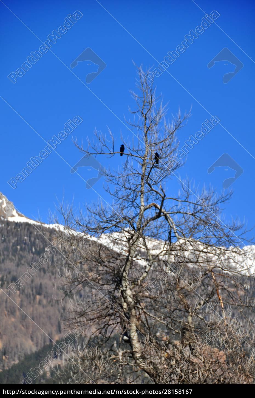 predazzo, in, italien - 28158167