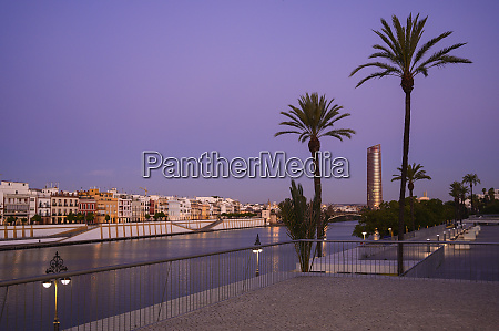 palm trees in front of sevilla