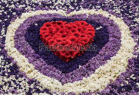 plattform mit tulpen und hyazinthen
