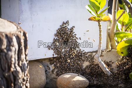 bienenschwarm auf pflanzen