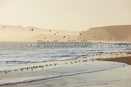 sandpipers and gulls flying across surf