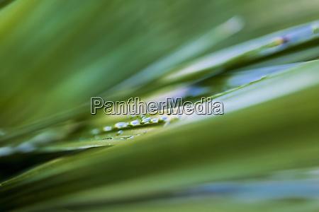 nahaufnahme von wassertroepfchen auf gruenen pflanzenblaettern