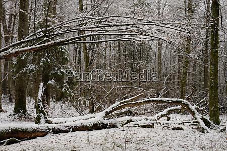 winterlandschaft mit verschneitem laubstand