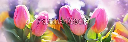 rosa tulpen in einem blumenbeet