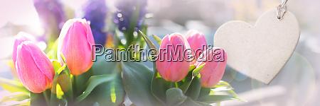 frische tulpen fuer den muttertag