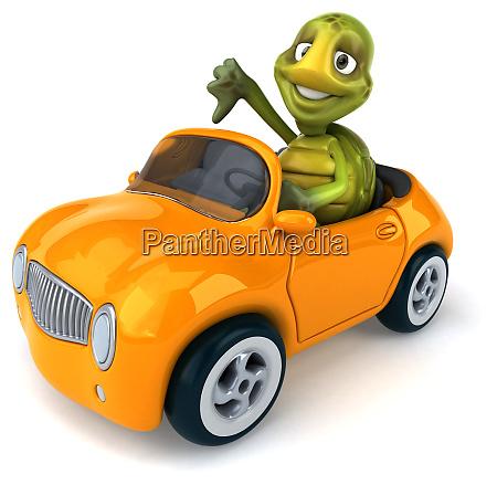 fun, turtle - 28218125