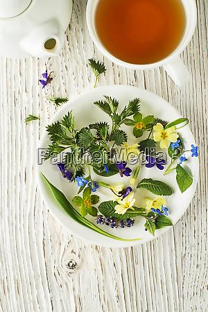 tee teetasse teezeit kraeuter fruehling vorteile