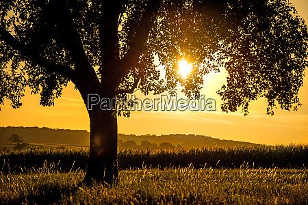 sonnenuntergang baum hintergrundlicht wiese braun gras