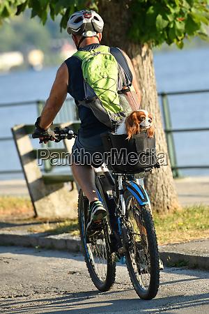 ein radfahrer mit einem hund auf