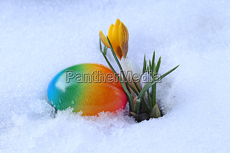 a colourful easter egg and flowering