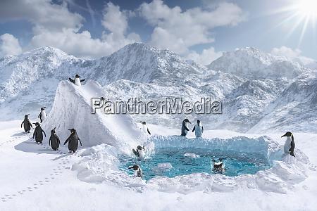 pinguine spielen auf rutsche und im