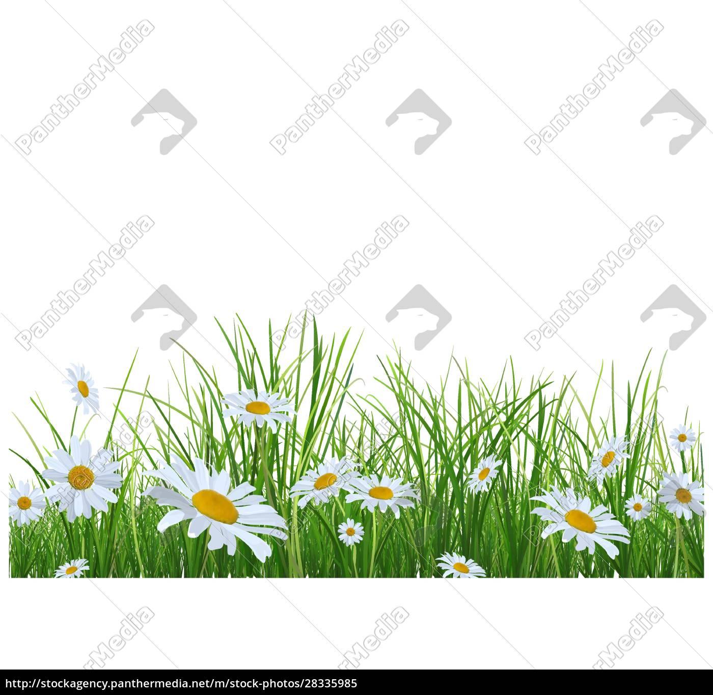 gras, mit, gänseblümchen, blumen - 28335985