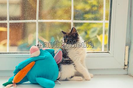 flauschige katze wird mit seinem spielzeugfreund