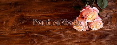 rosa rosen auf altem holz