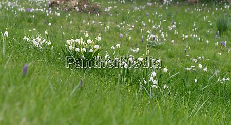spring, snowflakes - 28357711