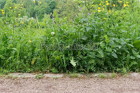 wildpflanzen, im, frühling - 28357694