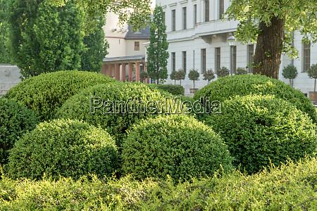 geformte buchsbaumkugeln