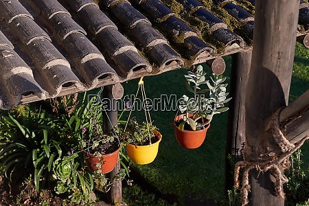 blumentoepfe und pflanzen auf einer hinterhofterrasse