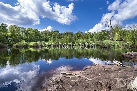 naturschutzgebiet moorland hamburg eppendorf