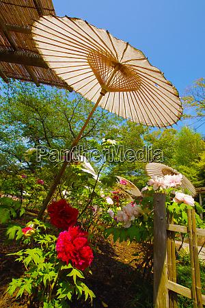 landschaft gibt es einen japanischen regenschirm