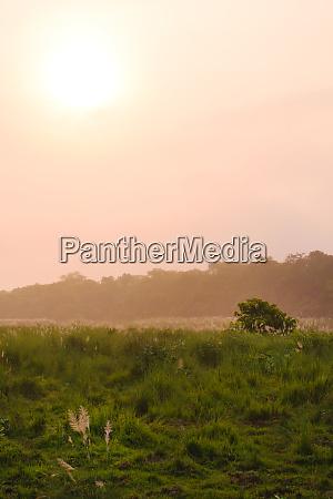 chitwan nationalpark grasland bei sonnenaufgang chitwan
