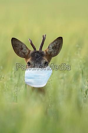 buck deer in the mask