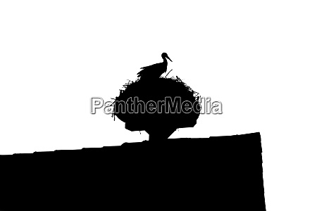 wilder storch sitzt auf dachnest mit