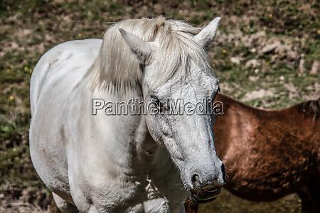 edle anmutige pferde auf der weide