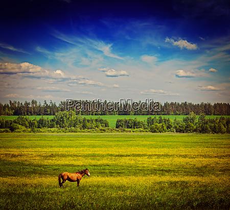 fruehling sommer gruene wiese landschaft lanscape