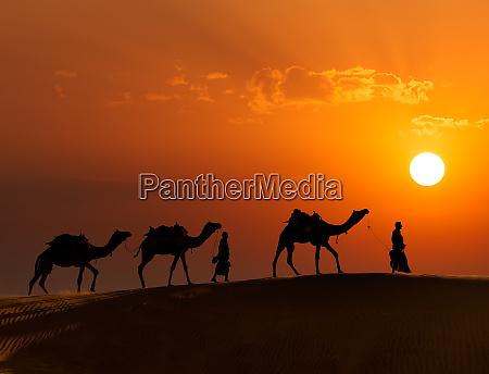 zwei kameltreiber kameltreiber mit kamelen in