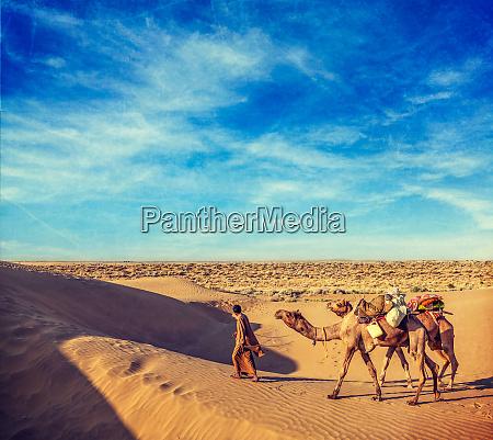 cameleer kamelfahrer mit kamelen in duenen