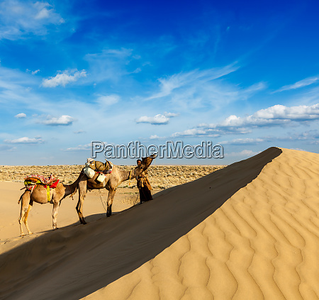 cameleer, (camel, driver), with, camels, in - 28467391