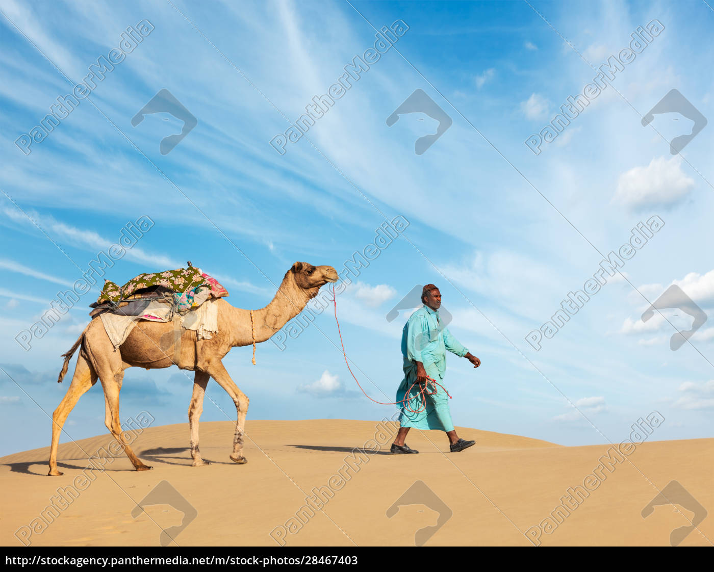 cameleer, (camel, driver), with, camels, in - 28467403