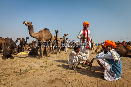 pushkar indien 20 november 2012