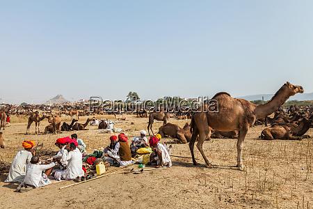 indische maenner und kamele auf der