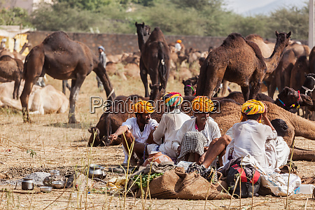 indian, men, and, camels, at, pushkar - 28469115