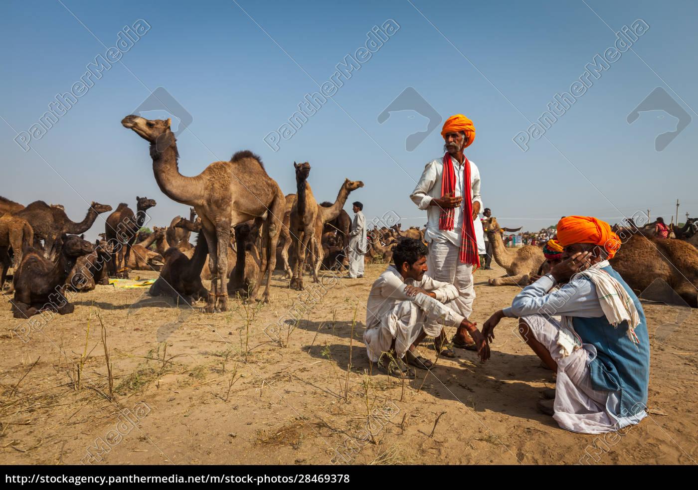 indische, männer, und, kamele, auf, der - 28469378