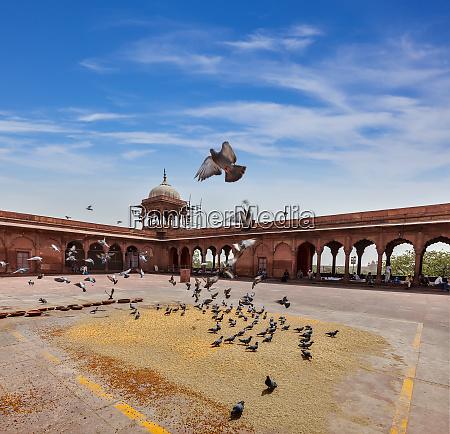 pigeons, in, jama, masjid, mosque - 28469658