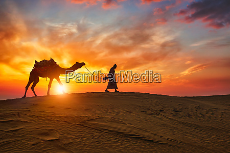 indian, cameleer, camel, driver, with, camel - 28470705