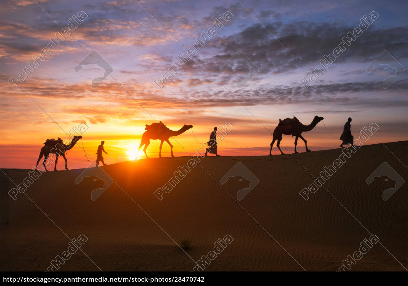 indian, cameleers, camel, driver, with, camel - 28470742