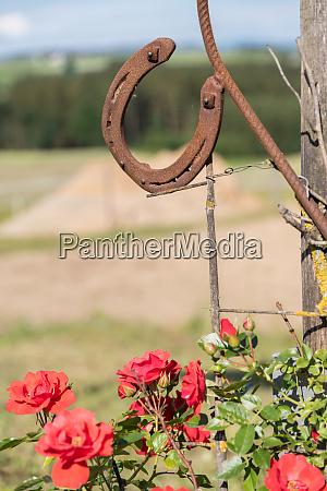 rostige hufeisen und rote rosen