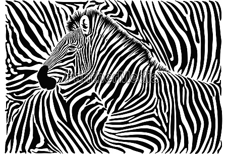 hintergrund mit zebramotiv