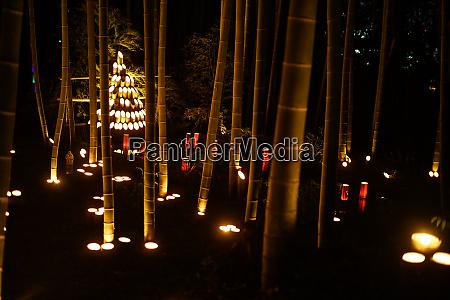 bambuswald leuchtet kleiner schreibtisch schlosswald der