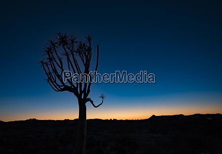 koeche sind einzigartig in namibiaq