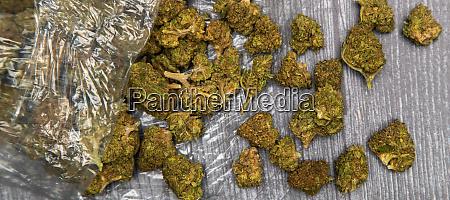 knospen von medizinischem marihuana in clear