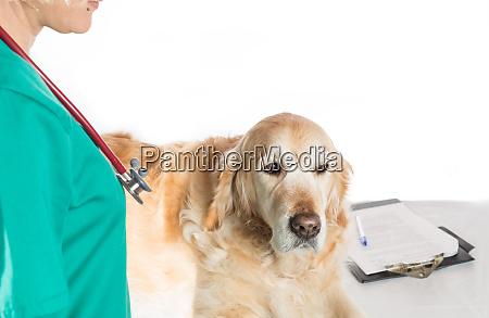 veterinaerkonsultation