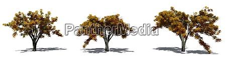 Medien-Nr. 28537502
